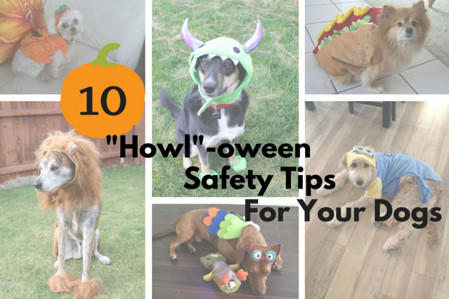 Halloween Dog Safety Tips