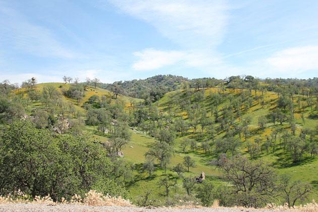 California Hwy 155