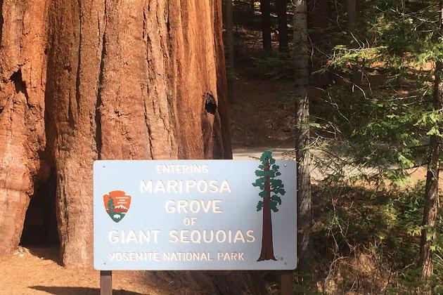 Mariposa Grove of the Giant Sequoias
