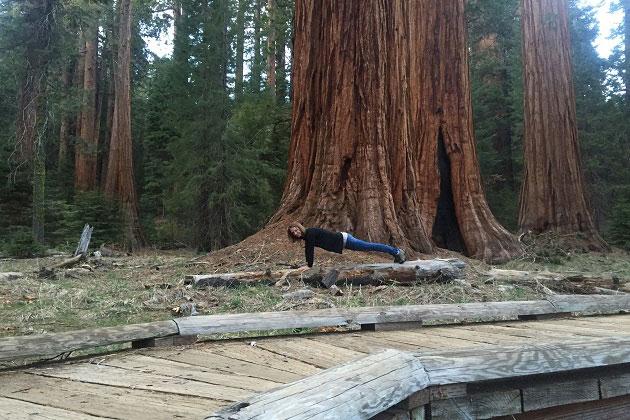 Sequoia Plank