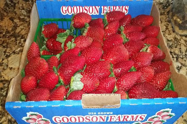 Fresh Goodson Farms Strawberries