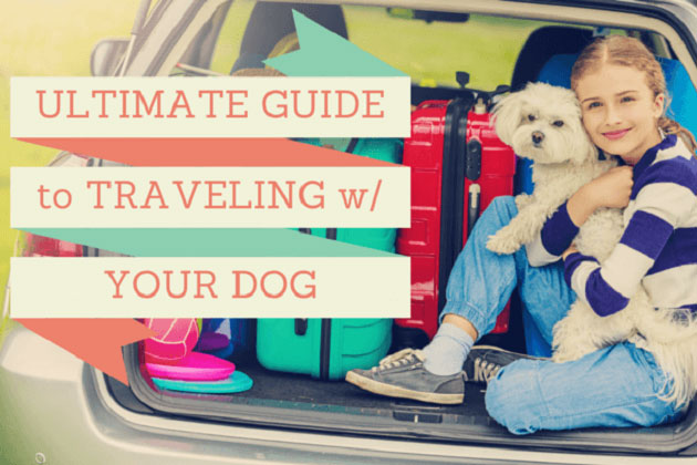 Traveling with your dog guide