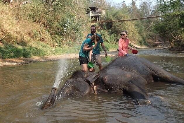 Chai Lai Orchid Elephants Experience